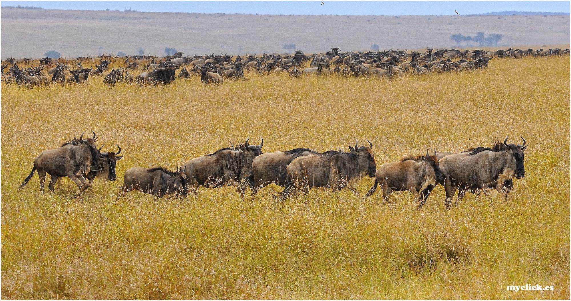 MEMORIAS DE AFRICA-SOLO ÑUS -4 PN MASAI MARA-KENIA