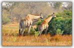 MEMORIAS DE AFRICA -TRES CEBRAS PN CHOBE-BOSTWANA