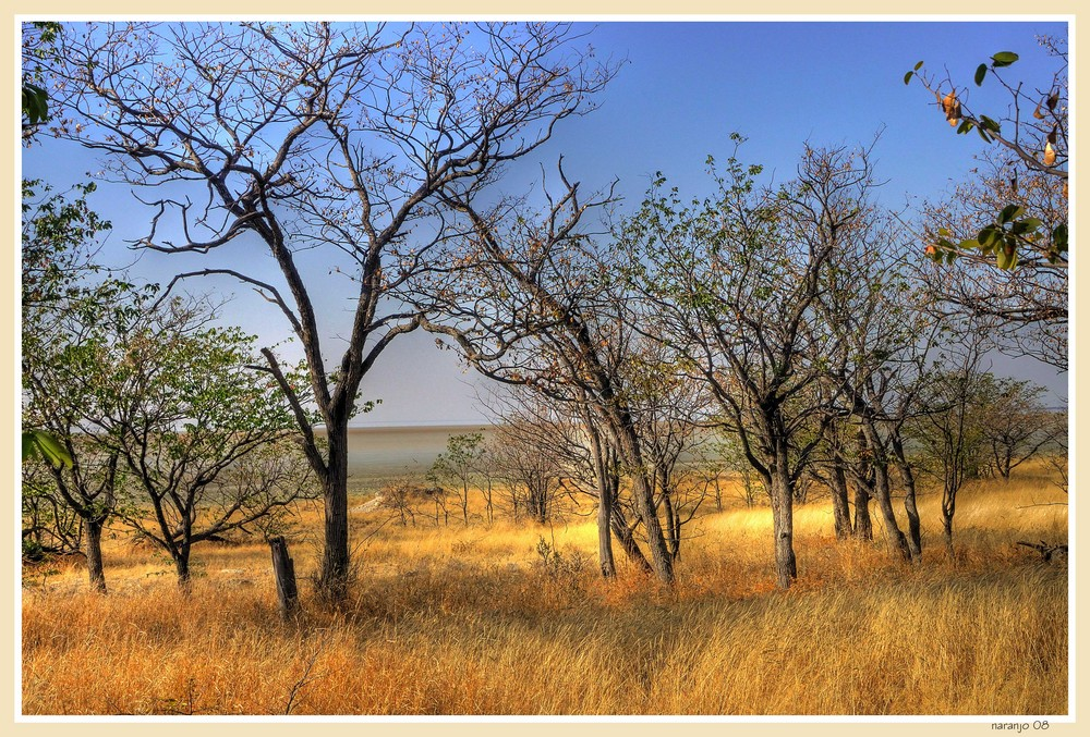 MEMORIAS DE AFRICA - UN ALTO EN ELCAMINO -ETHOSA