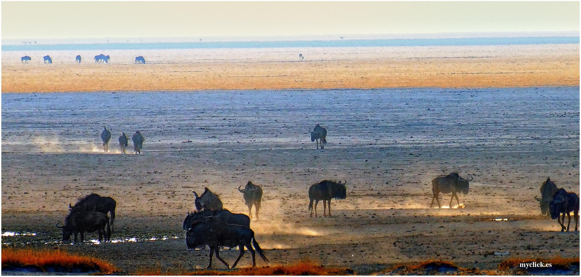 MEMORIAS DE AFRICA-ÑUS AL AMANECER-PN ETHOSA NAMIBIA