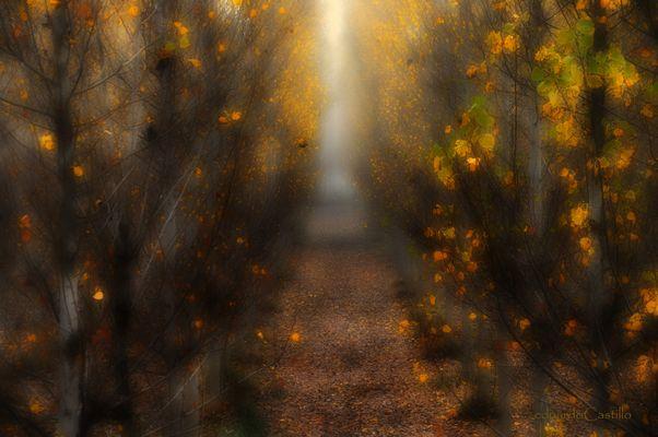 Memorias de árbol