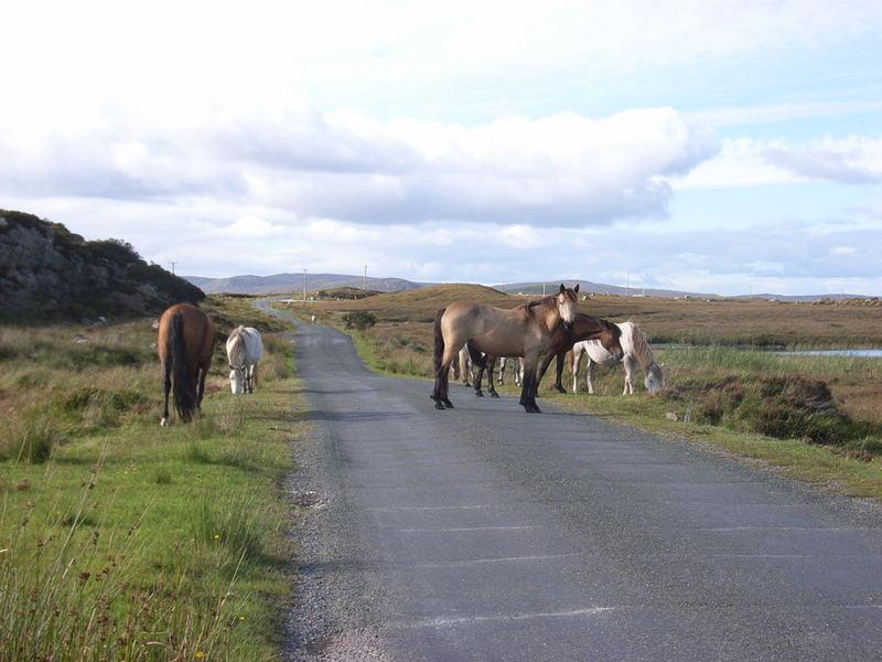 Memories of Connemara