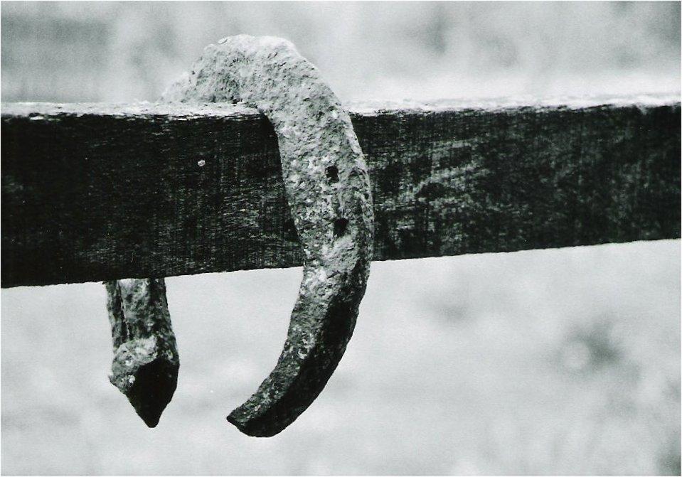 Memory of past Horses