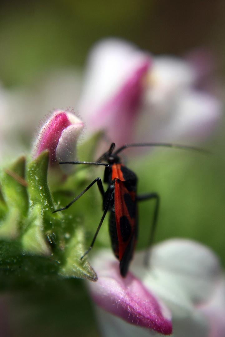 menorcaflorida_insectos