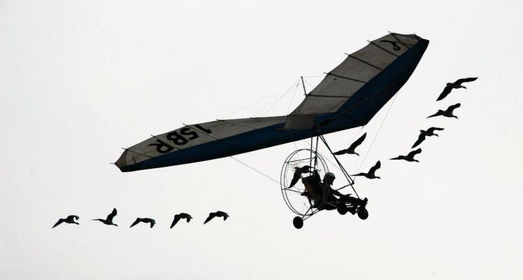 Mensch, Fluggerät und Wildgänse