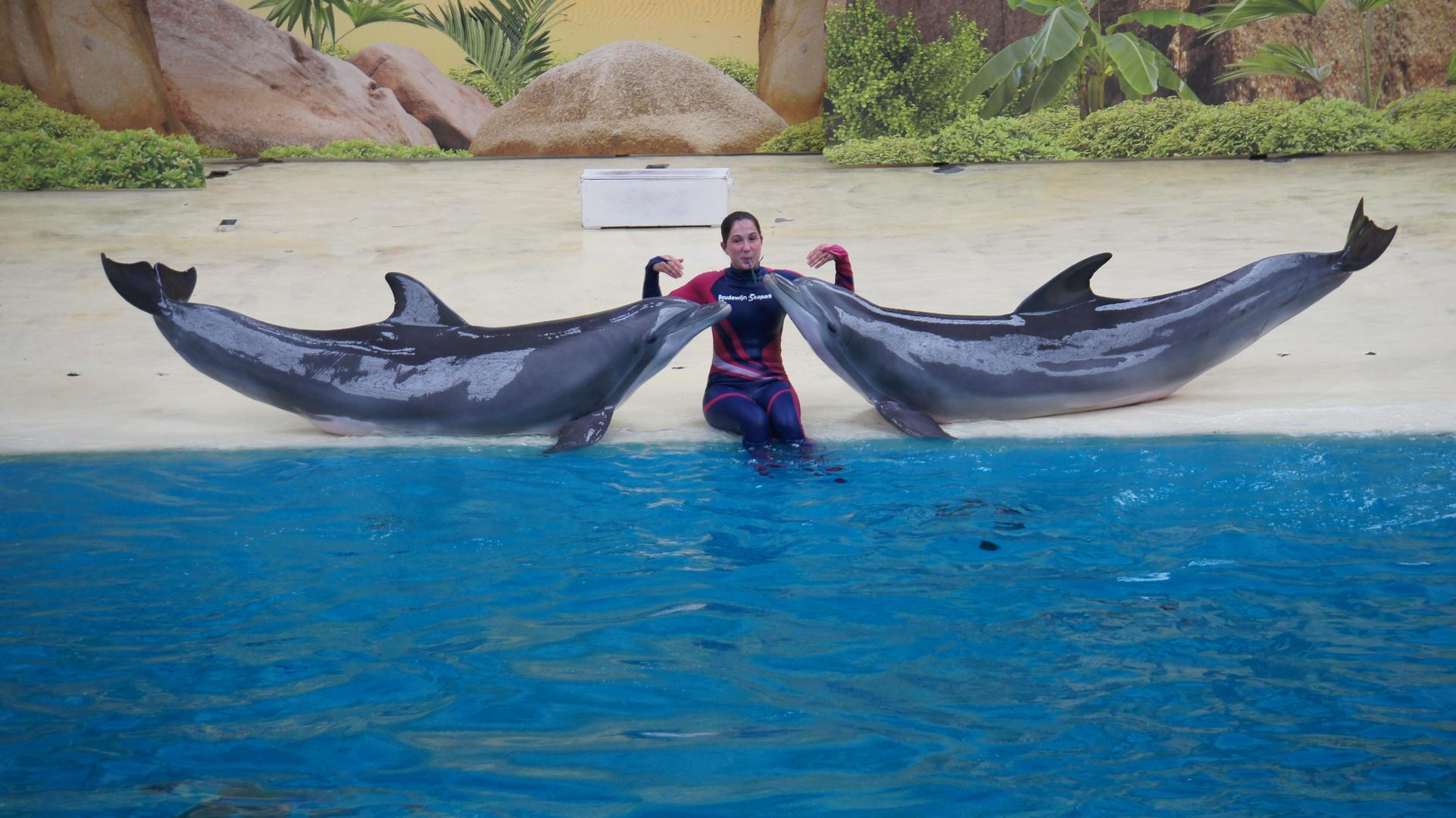Mensch und Delfinen