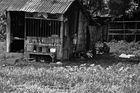 mensch und hund.... neben den bahngleisen, yangon, burma 2011