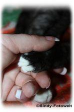 ...Mensch und Tier geben sich die Hand...