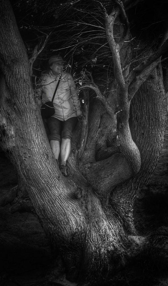 Menschen die in Bäumen stehen