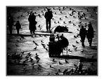Menschen oder Tauben