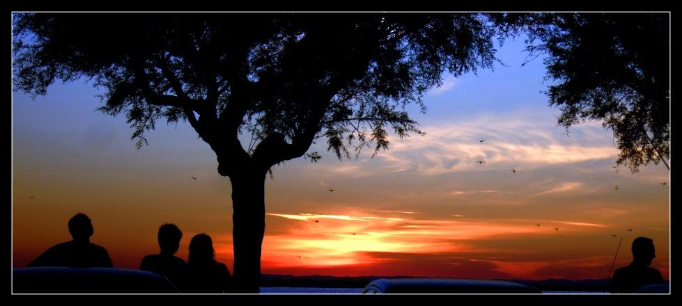 Menschen und Libellen - einen Sonnenuntergang genießend