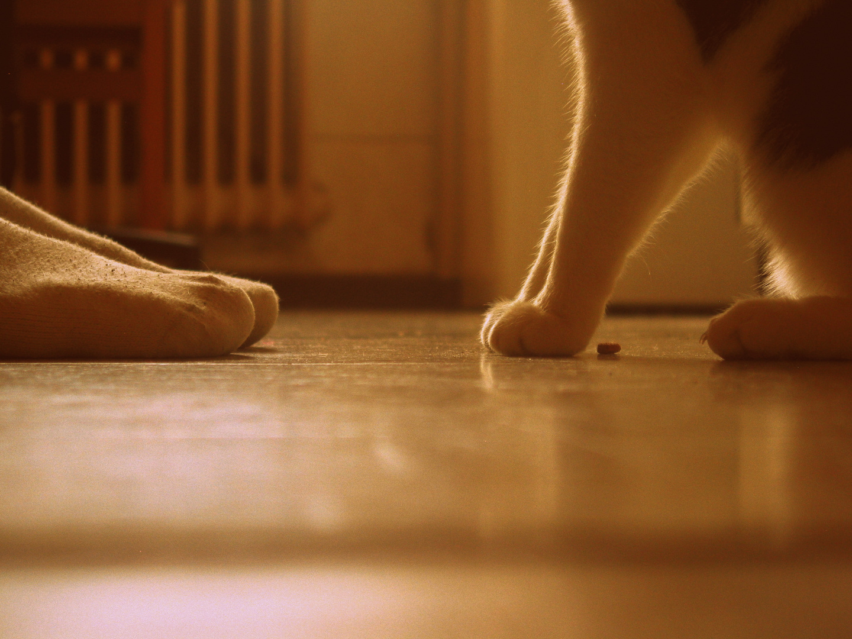 Mensch&Katze