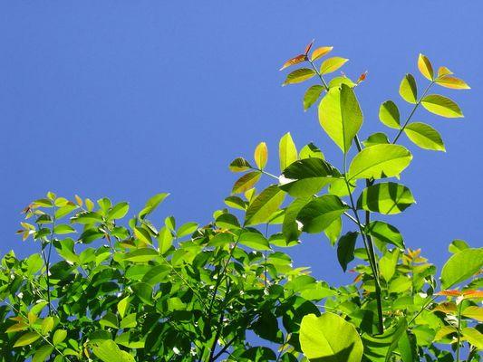 Menüvorschlag: Junge Blätter