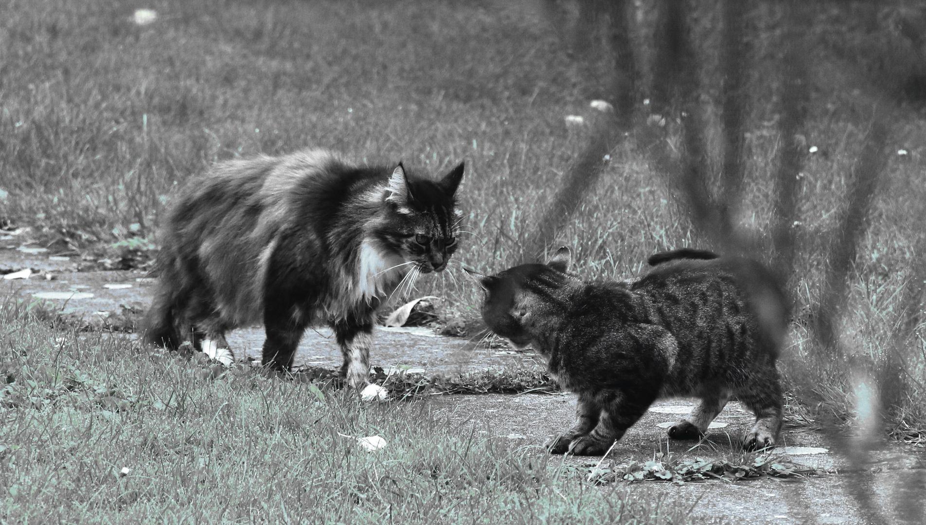 Mephisto vs. Woopie