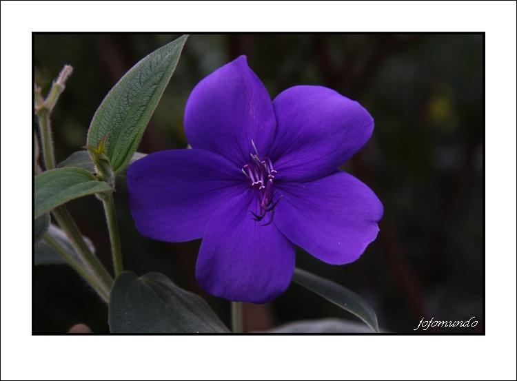 merci petite fleur