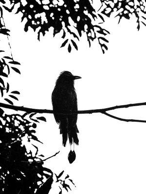 merkwürdiger Vogel