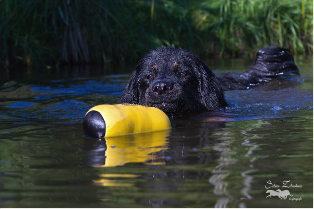 Merlin, auch er hatte Spaß im Wasser