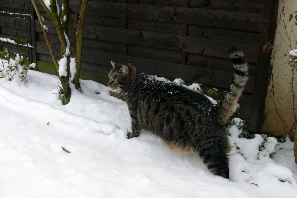 Merlin im Schnee...