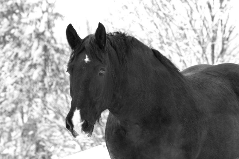 Merlin - schwarz-weiß