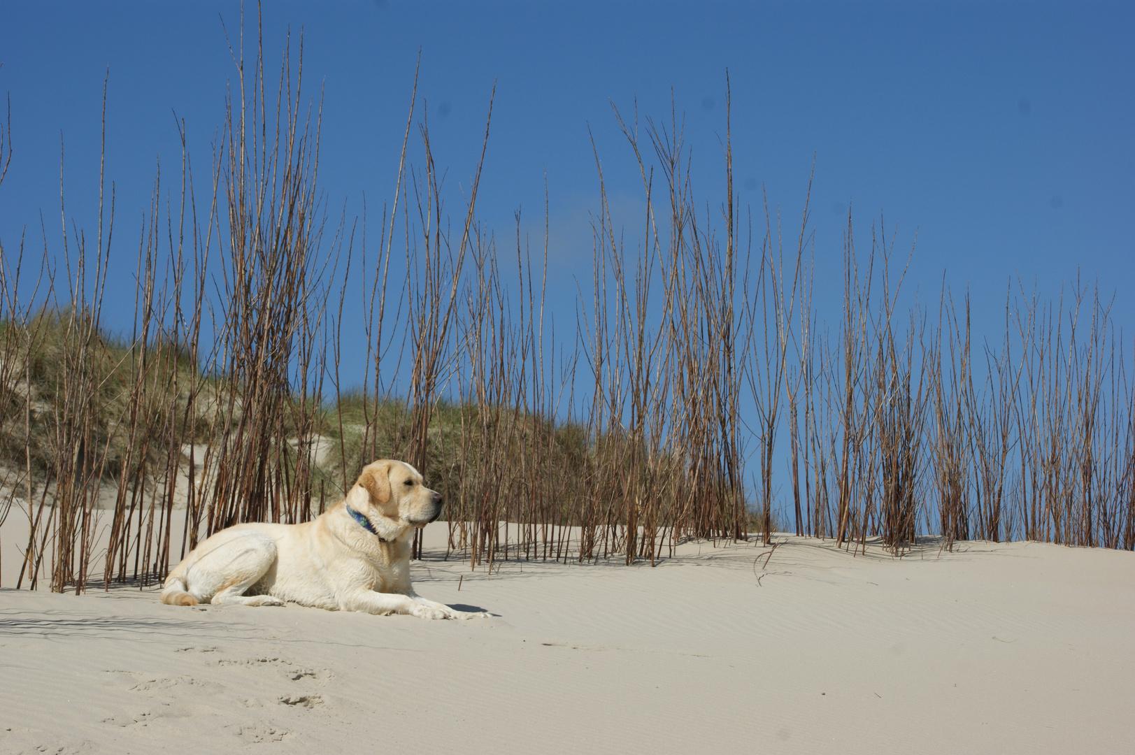 Merlin sonnt sich am Strand