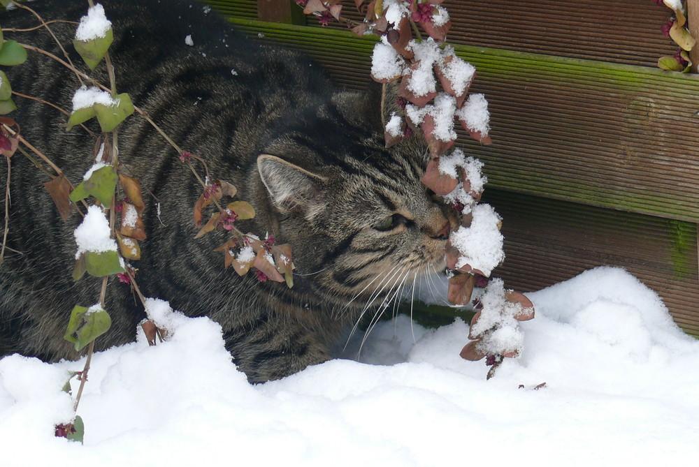 Merlin und der Schnee