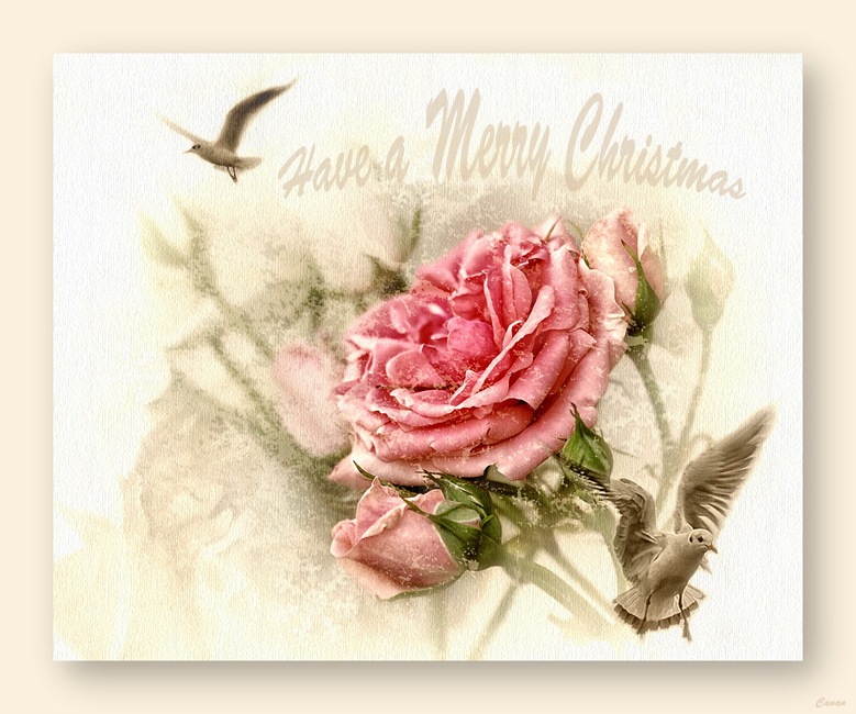 Merry Christmas and A Happy New Year.......