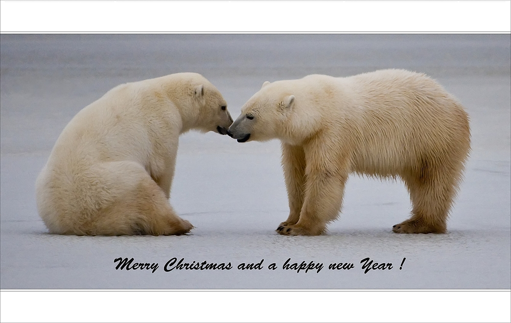 [ Merry Christmas and a happy new Year ]
