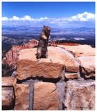 Merry X-mas and a Happy New Year from the Rainbow Point of the Bryce Canyon