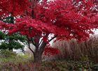 merveilleux automne !