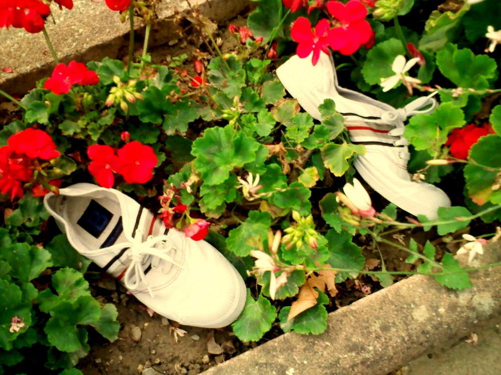 Mes chausures , dans un massif de géranium