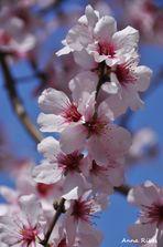 Més floretes de primavera