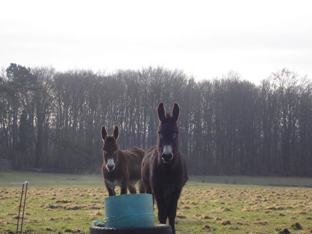 Mes ânes.