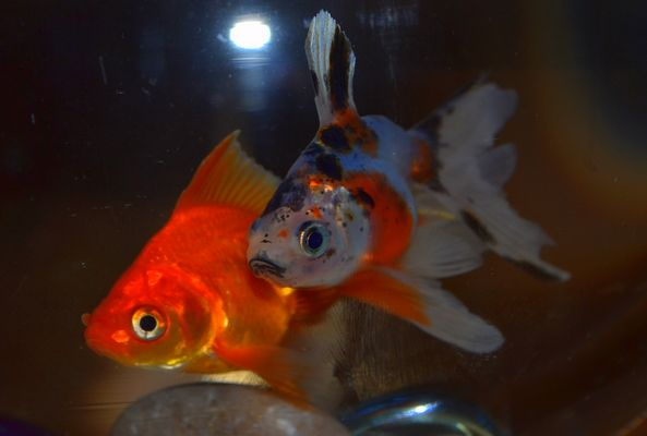 Mes poissons <3