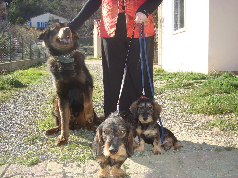 Mes trois chiens