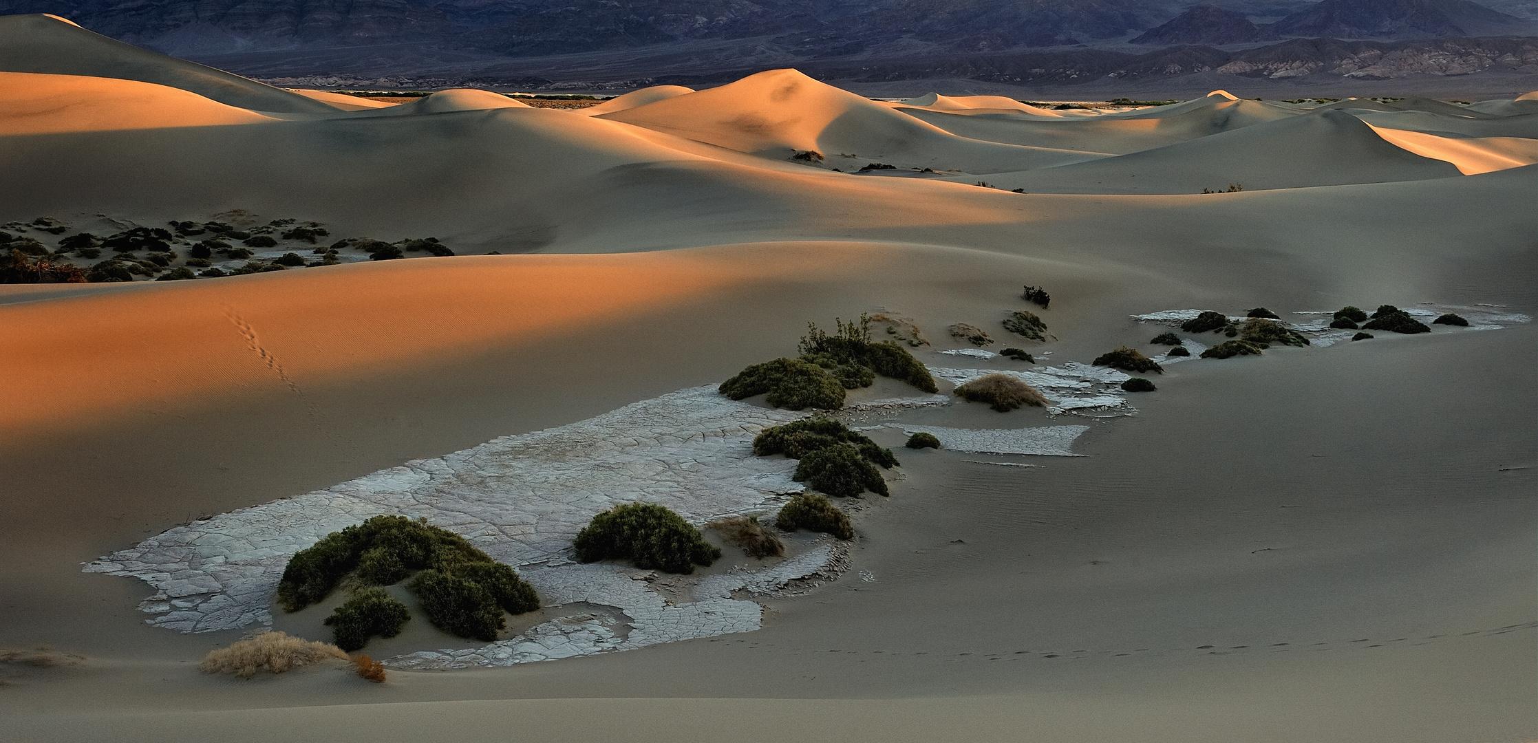 *mesquite flat sand dunes morning*
