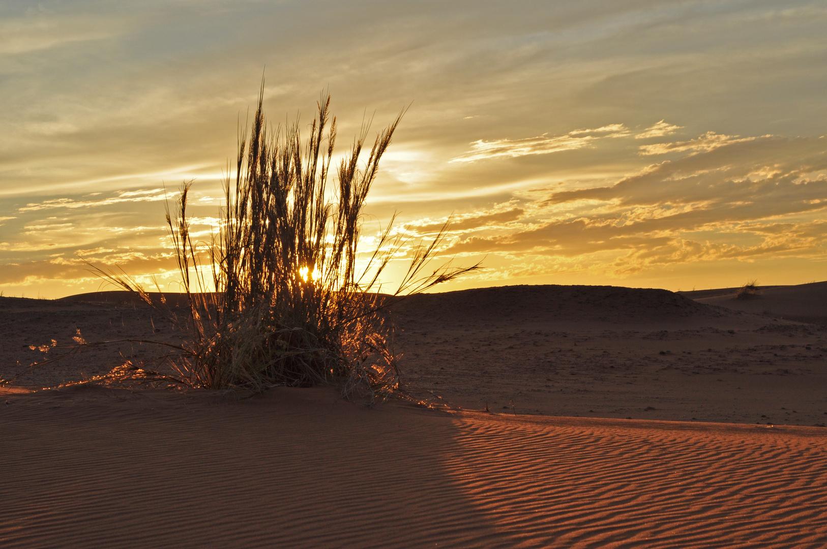 Messungen von IR Strahlung in der Namib (4)