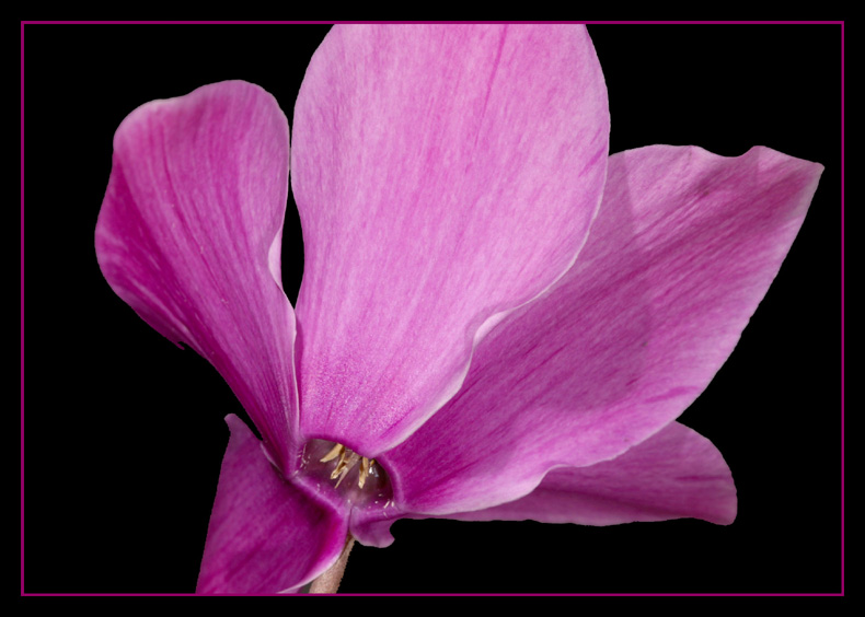 Metamorphose einer Blüte