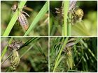 Metamorphose einer Libelle