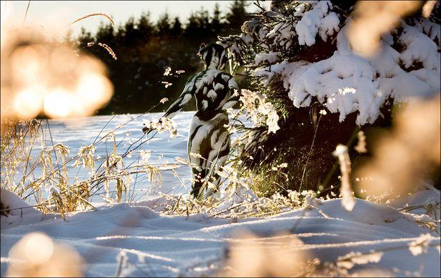 Metamorphosen-Verschwundene Körper - Januar 2011