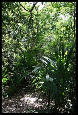 Mexikanischer Dschungel...
