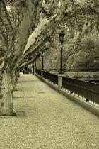 Mi calle en Zaragoza