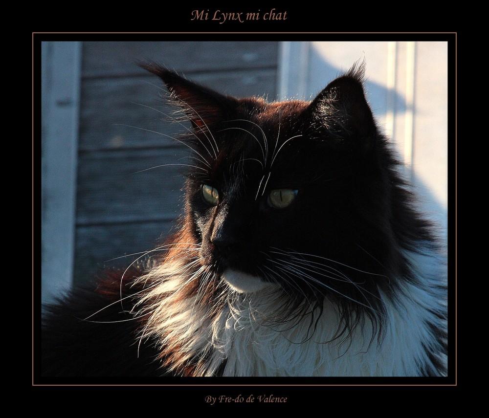 Mi lynx, mi chat