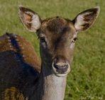 mi nombre es Bambi.../ Mein Name ist Bambi....