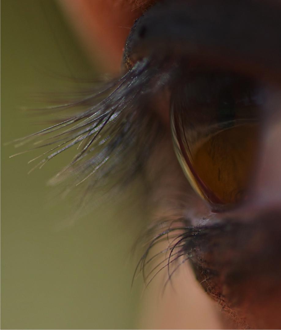 mi ojo =)