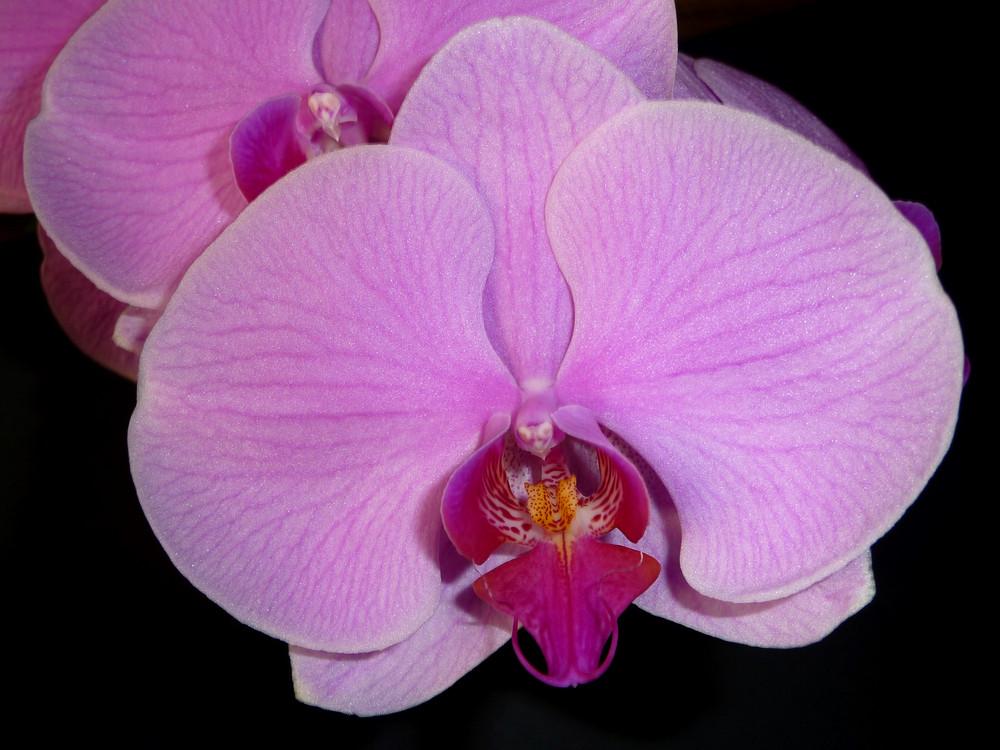 Mi orquídea con fondo
