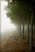 Mi paseo... (Dedicada a Anita Luz)