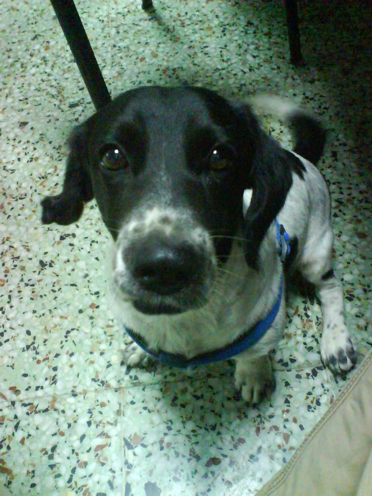 Mi perro Jacky. Lovely Jacky.