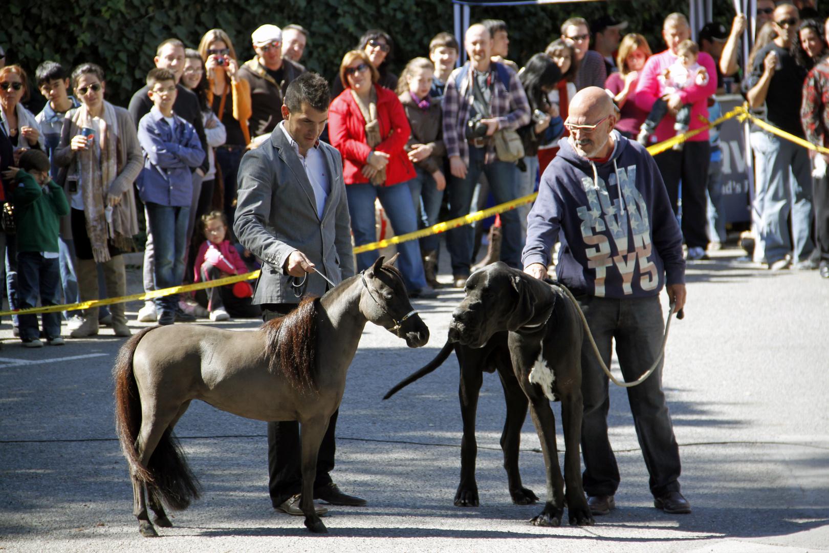 Mi reino por un caballo o por un perro