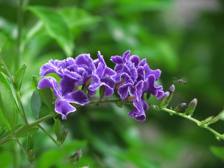 Mi sueño violeta