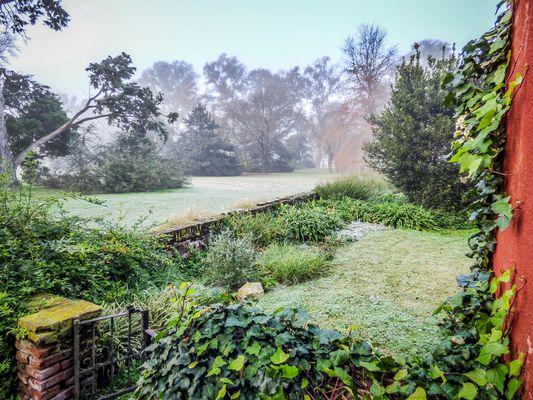 Mi triste jardín en invierno